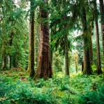 Saving Rainforests in the Northwest