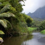 Keeping the Hawaiian Islands Green